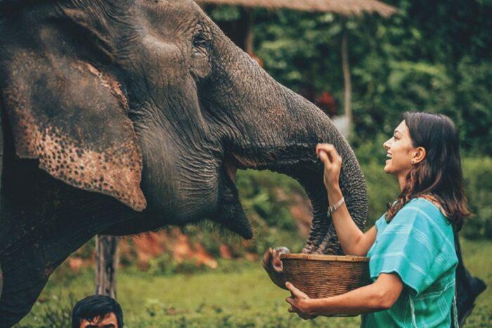 Lua de mel em Africa quenia tanzania elefante
