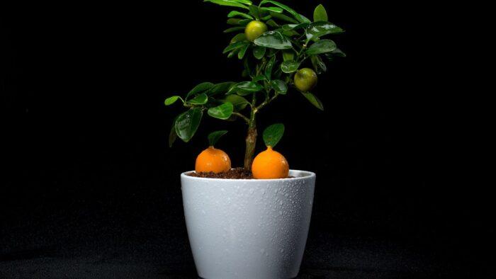laranjas restaurante vista portimão